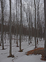 FOREST_LOCATION_90149