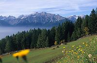 Europe/Autriche/Tyrol/Env Wattenberg: Pâturages