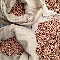 Sacchi di nocciole astigiane durante la raccolta