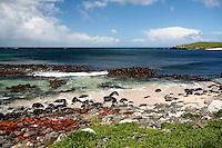 Auckland Island Coastline