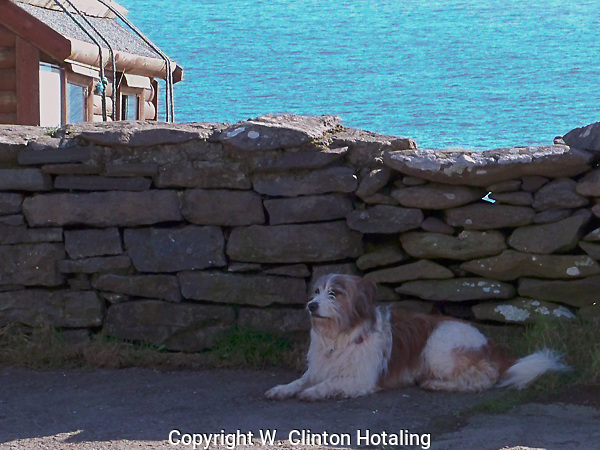 A local pooch (possibly belonging with the ticket taker in the booth behind it) relaxes in the shade of the wall that follows the main road around the Dingle Peninsula.