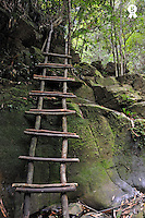 Wooden ladder in rain forest (Licence this image exclusively with Getty: http://www.gettyimages.com/detail/83154193 )