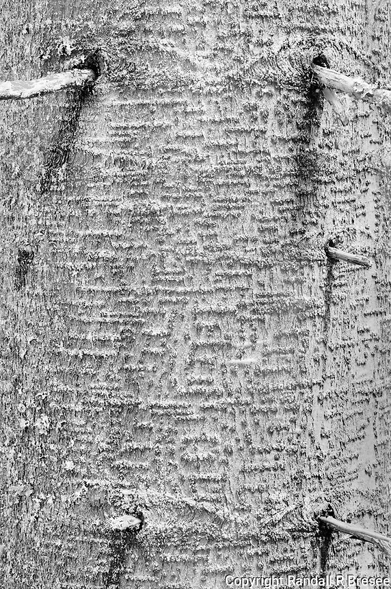 """""""Tree Trunk""""<br /> Glacier National Park; British Columbia, Canada<br /> <br /> This photograph was recorded at Glacier National Park in eastern British Columbia, Canada. My goal was to make a somewhat abstract photo of a single tree in the rainforest surrounding the Hemlock Grove boardwalk trail. The light was quite dim because of the lush tree cover so a 6-second exposure was required and N+1 development was used to increase image contrast on the film."""