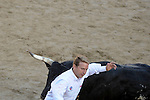 Participants run in front bulls after the bull run of the San Sebastian de los Reyes Festival, near Madrid, on august 26, 2014. © Pedro ARMESTRE