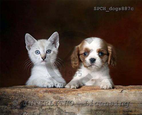 Xavier, ANIMALS, dogs, photos+++++,SPCHDOGS887C,#a# Hunde, perros
