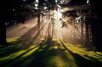 Sunlight and morning fog through trees, Portland, Oregon