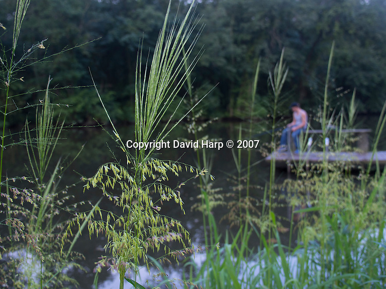 You know is still fresh water when wild rice shoots skyward in August.   This is at Hillsboro Landing on the Tuckahoe.