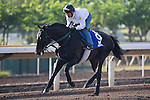 SHA TIN,HONG KONG-DECEMBER 09: Logotype,trained by Tsuyoshi Tanaka,exercises in preparation for the Hong Kong Mile at Sha Tin Racecourse on December 9,2016 in Sha Tin,New Territories,Hong Kong (Photo by Kaz Ishida/Eclipse Sportswire/Getty Images)
