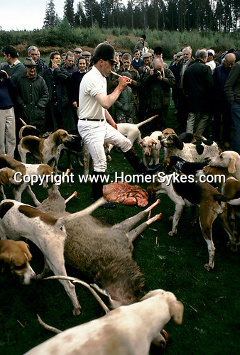 Quantock Staghounds, Quantock Hills Somerset and Exmoor Devon. The Quarry has been disembowelled, huntsman blows his horn 1997 1990s UK