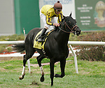 January 2010: El Caballo and Robby Albarado win the Col. E.R. Bradley Handicap at the Fairgrounds in New Orleans, La.