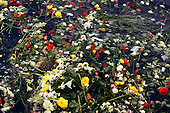 Salvador, Bahia, Brazil. Carpet of flowers and fruit offerings floating on the sea; Festival of Iemanja.