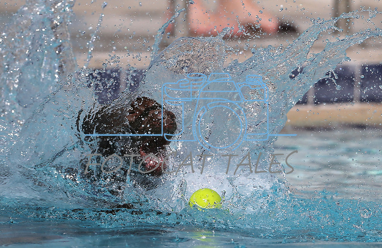 Sophie plays at the 9th annual Pooch Plunge at the Carson City Aquatics Center in Carson City, Nev., on Saturday, Sept. 23, 2017. The event is a fundraiser for Carson Animal Services Initiative which supports the Nevada Humane Society in Carson City. <br />