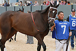 April 5, 2014: #7 Stopchargingmaria before the running of the Fantasy Stakes at Oaklawn Park in Hot Springs, AR. Justin Manning/ESW/CSM