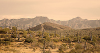 The Baja California landscape in sepia tone