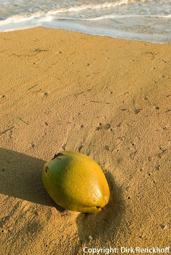 Dominikanische Republik, Strand von Las Terrenas auf der Samana-Halbinsel, Kokosnuss