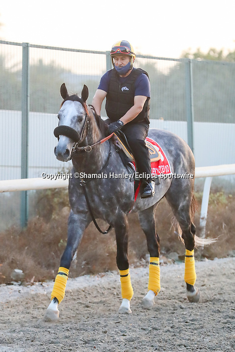 March 25, 2021: Dubai World Cup contender Sleepy Eyes Todd trains on the track for trainer Miguel Silva at Meydan Racecourse, Dubai, UAE.<br />