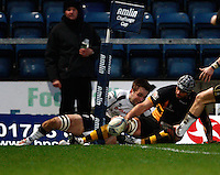 Photo: Richard Lane/Richard Lane Photography. London Wasps v Rugby Mogliano. Amlin Challenge Cup. 12/01/2013. Wasps' arco Wentzel touches down for a try.
