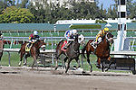 Global Strike (KY) with jockey Javier Castellano on board stumbles at the start and runs wire to wire to break his maiden. Hallandale Beach, Florida 02-22-2014