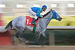 21 February 2009: B.B. Mancini with jockey Calvin Borel wins the 8th race at Oaklawn in Hot Springs, Arkansas