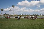 Scenes from Gulfstream Park, Hallandale Beach Florida. 03-12-2014