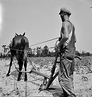 Ploughshares: A North Carolina tenant farmer who works on shares, July 1936.<br /> <br /> Photo by Dorothea Lang