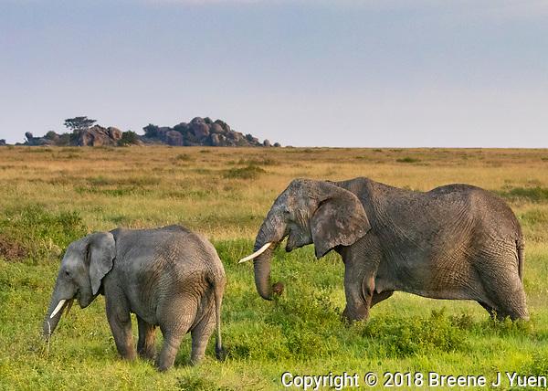 Elephant Mom and Cub, Serengeti, Tanzania
