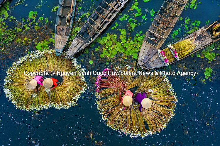 Colourfully dressed women in conical hats harvest huge bunches of water lilies.  The workers can be seen wading through the water to tend to the long-stemmed flowers.<br /> <br /> The flowers are the result of seasonal flooding and are sold as decorations at local markets and also used for tea and food.  The images were captured by banker and amateur photographer Nguyen Sanh Quoc Huy in Mộc Hoá, in Long An province, Vietnam.  SEE OUR COPY FOR DETAILS.<br /> <br /> Please byline: Nguyen Sanh Quoc Huy/Solent News<br /> <br /> © Nguyen Sanh Quoc Huy/Solent News & Photo Agency<br /> UK +44 (0) 2380 458800