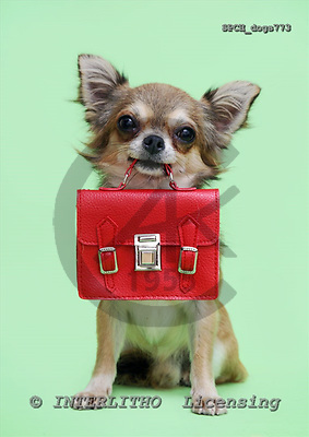 Xavier, ANIMALS, dogs, photos, SPCHdogs773,#A# Hunde, perros