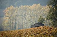 Europe/France/Midi-Pyrénées/81/Tarn/env de Mauriac: le vignoble de Gaillac