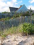 Beach roses and fence. Cape Cod, MA