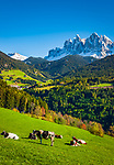 Italien, Suedtirol (Trentino - Alto Adige), Dolomiten, Villnoesstal, oberhalb Bergdorf St. Peter: Almwiese vor der Geislergruppe im Naturpark Puez-Geisler | Italy, South Tyrol (Trentino - Alto Adige), Villnoess Valley, above mountain village St Peter: mountain pasture with Le Odle mountains at natural park Puez-Odle
