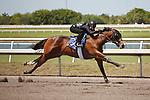#132Fasig-Tipton Florida Sale,Under Tack Show. Palm Meadows Florida 03-23-2012