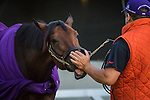 LOUISVILLE, KY - MAY 04: Nyquist cooling out after galloping in preparation for the Kentucky Derby at Churchill Downs on May 04, 2016 in Louisville, Kentucky. (Photo by Zoe Metz/Eclipse Sportswire/Getty Images)