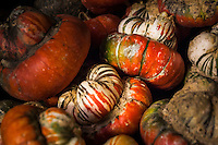 Vine ripened fall colors in the form of Turban Squash, available at a roadside stand north of Ogden, Utah.