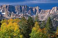 Aspen,  Jeffrey pine and Dana Plateau<br />