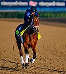 LOUISVILLE, KY - APRIL 30: Audible, trained by Todd Pletcher, exercises in preparation for the Kentucky Derby at Churchill Downs on April 30, 2018 in Louisville, Kentucky. (Photo by Scott Serio/Eclipse Sportswire/Getty Images)