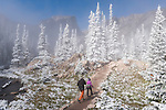 trail through a frosty forest on a September morning in Rocky Mountain National Park, Colorado, USA