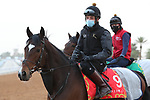 RIYADH, SA February 19 2021: SPANISH MISSION (USA) Track work from King Abddulaziz Racetrack, Riyadh, Saudi Arabia. Shamela Hanley/Eclipse Sportswire/CSM