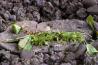 Offering left at Mookini Luakini Heiau, North Kohala