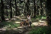 PALM PLANTATION - INDONESIA