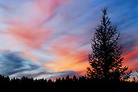 """""""NIGHT FALL""""<br /> <br /> Spectacular Montana sunset with Douglas Fir in silhouette. Image taken at Dancing Deer Ranch"""