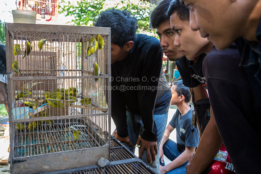 Yogyakarta, Java, Indonesia. Young Men in the Bird Market Inspecting Birds before Making a Purchase.