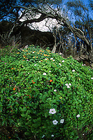Wildflower, Akaka Falls State Psrk, Big Island, Hawaii, US