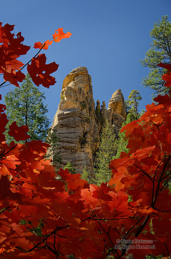 Maples in West Fork, Arizona