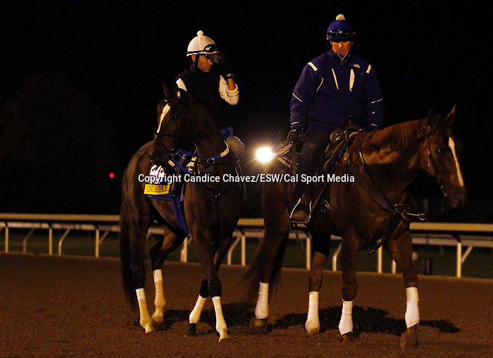 October 26, 2015:  Untapable, trained by Steven Asmussen, and owned by Winchell Thoroughbreds LLC, is entered in the Breeder's Cup Longines Distaff Grade 1 $2,000,000.  Candice Chavez/ESW/CSM