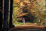 DEU, Deutschland, Bayern, Niederbayern, Naturpark Bayerischer Wald, Herbstlandschaft, Waldweg, Frau wandert mit Wanderstoecken | DEU, Germany, Bavaria, Lower-Bavaria, Nature Park Bavarian Forest, autumn landscape, wood, forest, woman hiking