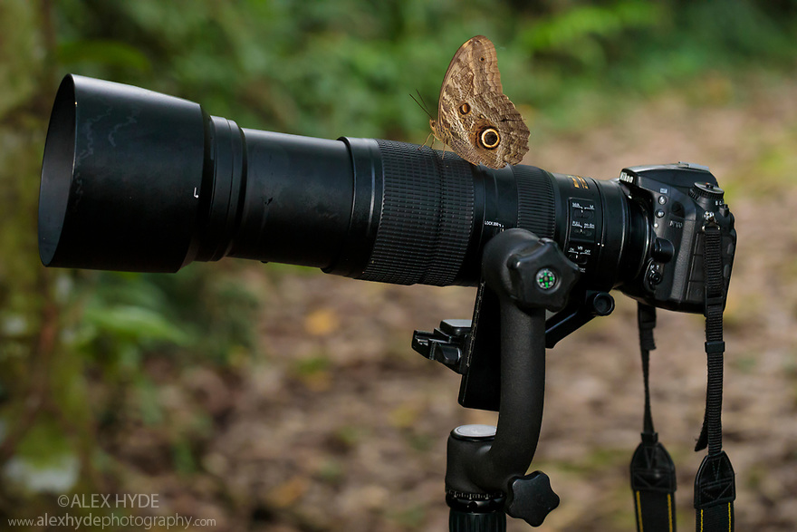 Owl Butterfly (Caligo sp.) resting on camera, Manu Biosphere Reserve, Amazonia, Peru. November.