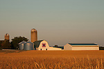 Wheat field and farm