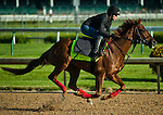 April 28, 2015: Far Right, trained by Ron Moquett, exercises in preparation for the 141st Kentucky Derby at Churchill Downs in Louisville, Kentucky. John Voorhees/ESW/CSM