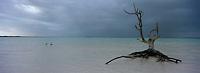 Iles Bahamas /Ile d'Eleuthera/Harbour Island/Dunmore Town: la plage et Fashion Tree - arbre mort célébré par de nombreux photographes de mode